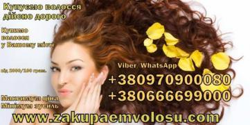 Buy hair from 24 000 UAH. up to 70 000 UAH. per kg