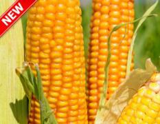 Купить семена подсолнечника и кукурузы